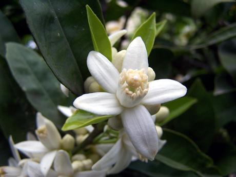 fiori-darancio